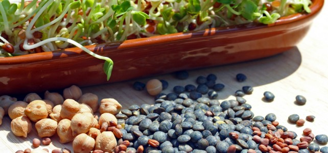 Salade de lentilles à l'anis vert